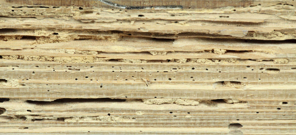 Wood rot specialists Wiltshire