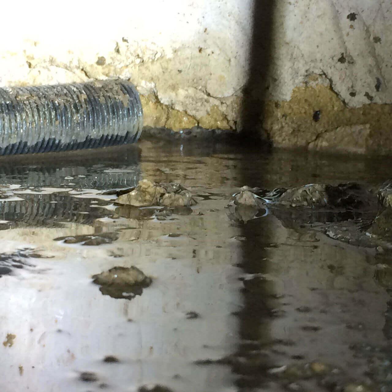 Wet Rot Swindon, Wiltshire