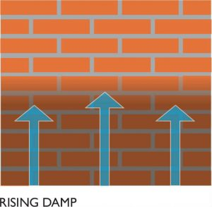 Rising Damp Swindon, Wiltshire
