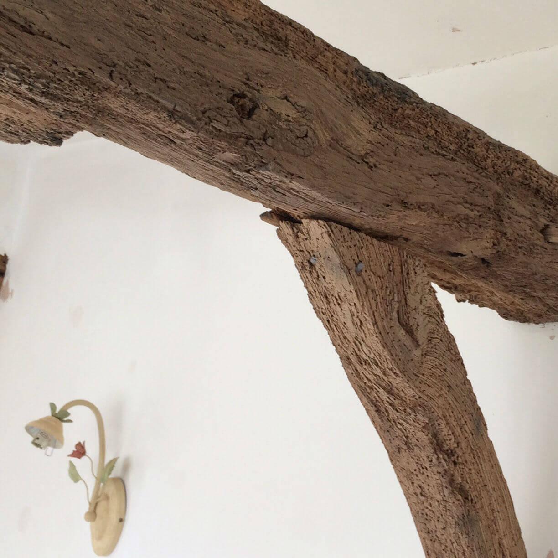 Woodworm Bristol