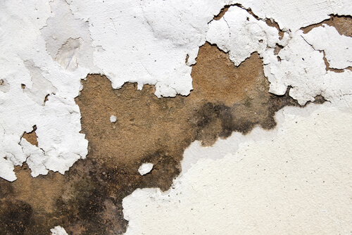 Specialist damp proofing company