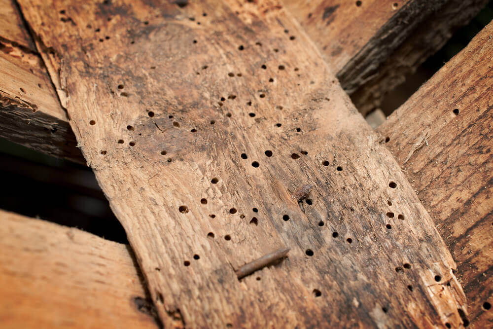 woodworm treatment