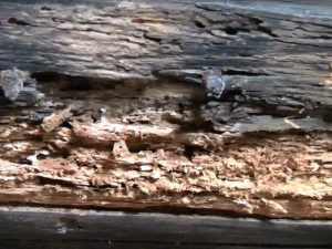 Crumbling wood